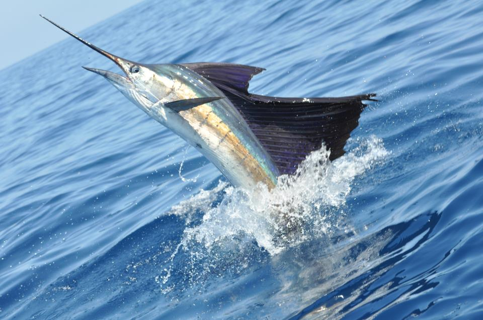 Outdoor adventures worldwide costa rica pacific for Colorado fishing license fees