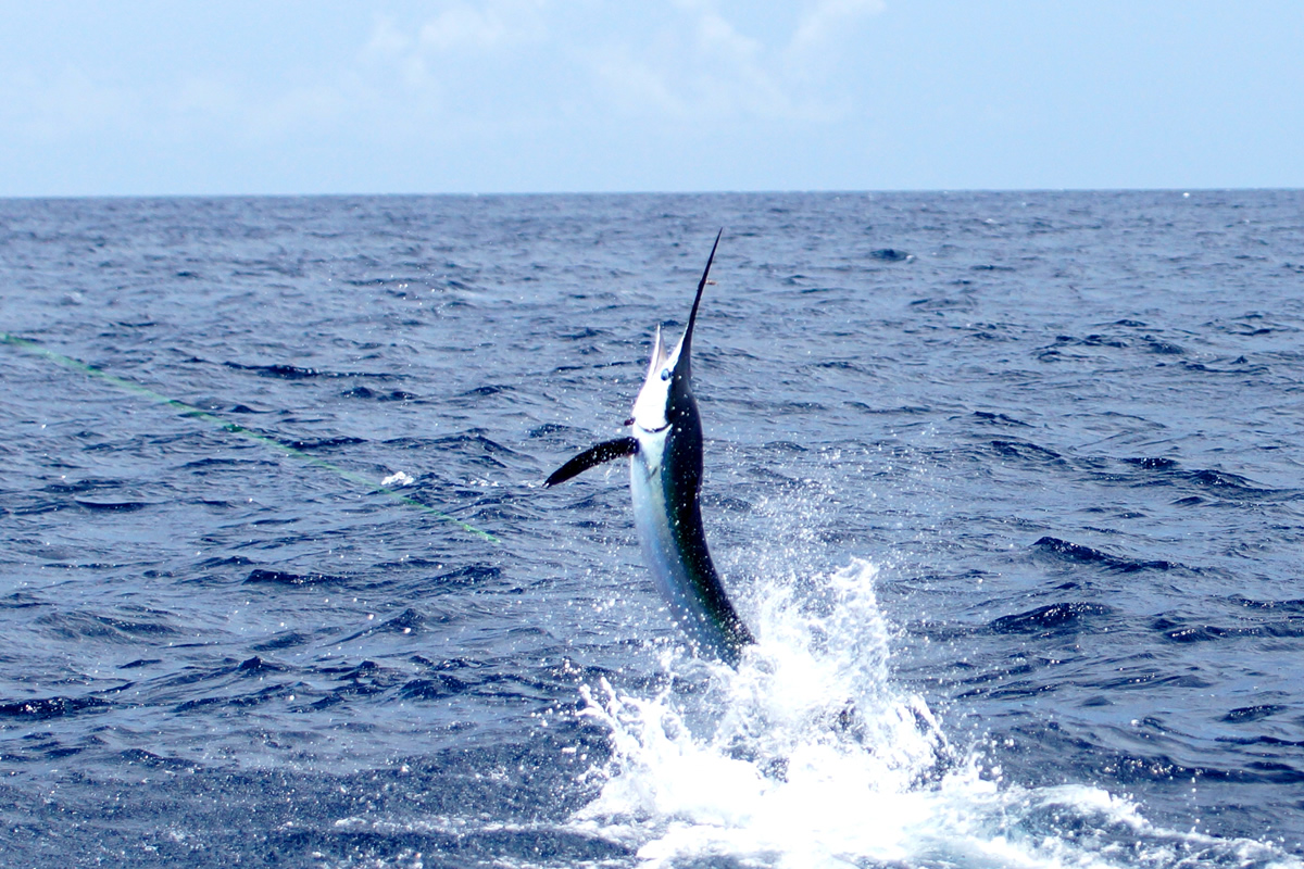 Outdoor adventures worldwide costa rica sportfishing for Fishing in costa rica