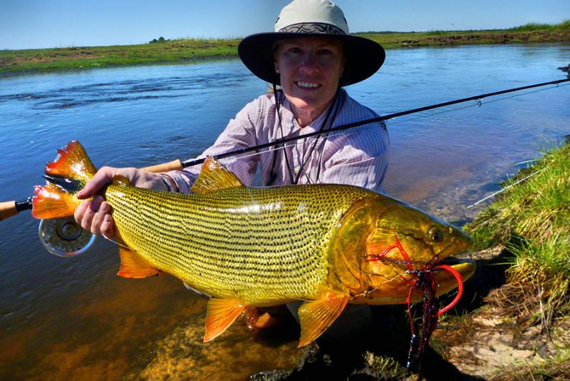 Outdoor adventures worldwide golden dorado pira argentina for Golden dorado fish