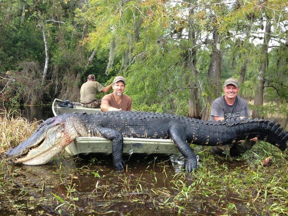 Outdoor adventures worldwide florida trophy alligator for Florida fishing license cost