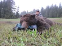 Southeastern Alaska Brown Bear