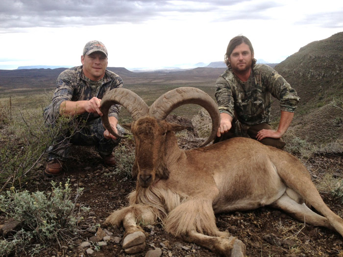 Outdoor adventures worldwide free range texas aoudad sheep for Texas fishing license cost