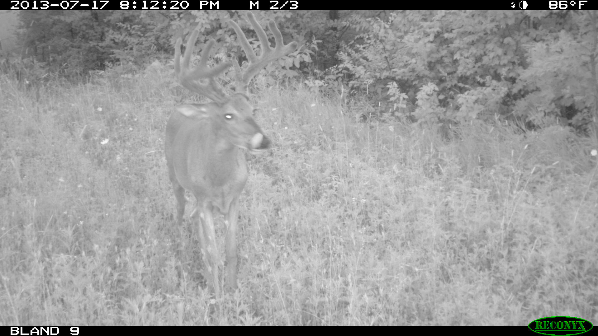 Outdoor adventures worldwide illinois deer hunting for Illinois fishing license cost