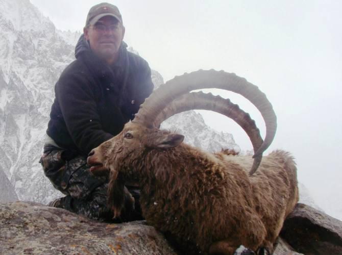 Himalayan ibex - photo#23